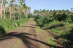 Taveuni, Fiji; the dirt road on the southern end of the island runs through a plantation of coconut palm trees on it's way to the Vuna Village, the Blow Hole and the Warrior Village