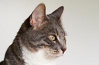 Cats: Bertie