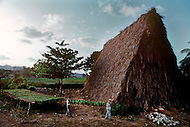 Cuba, March 1992: The Casa de Tobacco, a rare traditional tobacco drying house near Vinales, Cuba. where the tobacco leaves are stored after harvesting, to dry and ferment.