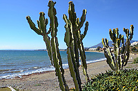 Costa del Sol, Spain, coastline between Estepona and Puerta Banus, Malaga Province. Cactus, cactii, holidays, travel, leisure, tourism, 201202241187..Copyright Image from Victor Patterson, 54 Dorchester Park, Belfast, UK, BT9 6RJ..Tel: +44 28 9066 1296.Mob: +44 7802 353836.Voicemail +44 20 8816 7153.Skype: victorpattersonbelfast.Email: victorpatterson@me.com.Email: victorpatterson@ireland.com (back-up)..IMPORTANT: If you wish to use this image or any other of my images please go to www.victorpatterson.com and click on the Terms & Conditions. Then contact me by email or phone with the reference number(s) of the image(s) concerned.