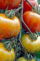 Tomatoes Mr Stripey aka Tigerella