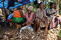 Men and women learning how to process cassava at a small factory run by Planting Promise, Newton, Freetown, Sierra Leone. Planting Promise's internet cafe, Freetown, Sierra Leone. Planting Promise is an organization dedicated to the development of education in Sierra Leone. Its aim is to bring opportunities to initiate self-run, self-supporting projects that offer real solutions to the difficulties facing the world's poorest country. They believe real and lasting development comes from below, from local projects that address specific needs, rather than large international models. To this end, they currently run five projects that aim to bring wealth into the country through business. The profits from these businesses are then used to support free education for children and adults...Through the combination of business with social progress, the charity hopes that they are providing real, lasting and profound changes for the better, by promoting sustainable and beneficial industry in the country, and putting it to the service to the needs of the people. As well as providing the income to fund the school, the farms will also be an example of successful commercial enterprise to teach the children in the school the viability of profit-making schemes that go beyond subsistence models, the only things the children of these desperately poor areas are accustomed to. By learning particular details of the challenges that they will face, the children will emerge from this school equipped to contribute in a real way to their society.