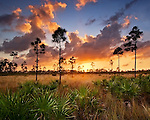 Pineland, Everglades National Park, Florida