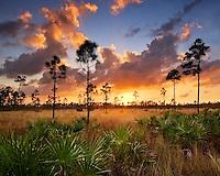 Pineland, Everglades National Park, Florida