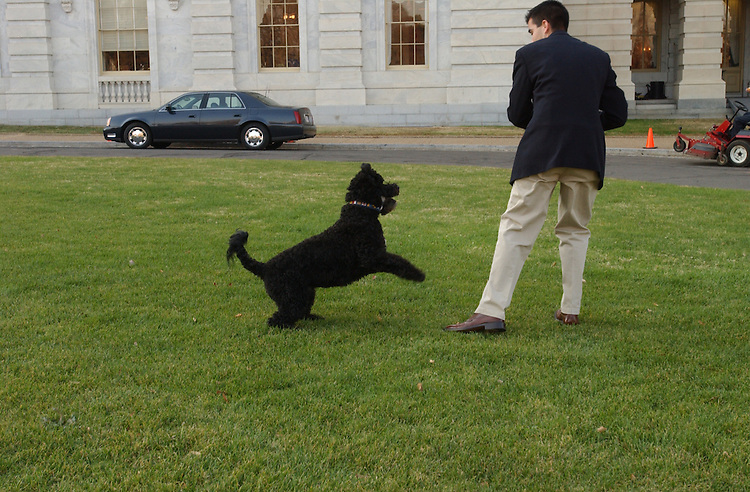 "1kennedy111501 -- ""Splash"" Kennedy, Senator Ted Kennedy's dog and intern Rick Rivas play fetch on the East Front of the U.S. Capitol."