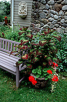 Wooden bench next to container of annual red geranium, Kong Coleus, house, fireplace, ornaments in backyard