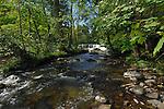 Fast moving stream, Aysgarth falls North Yorkshire,England