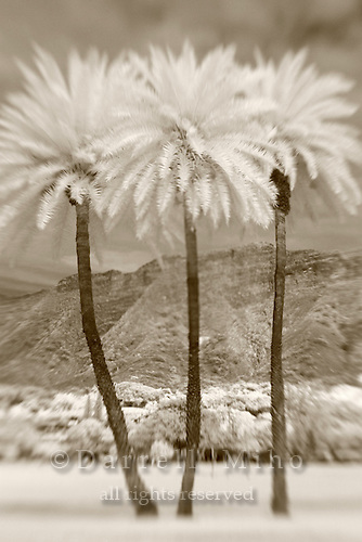 Apr. 30, 2010 - Oahu..Infrared