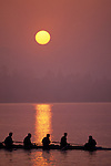 Crew on Union Bay, silhouetted at sunrise with oars in water creating wake, reflections, Seattle, Washington USA