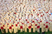 The Field of Remembrance at St Margaret's Church in Westminster.  A general view of the wooden crosses decorated with a red poppy.