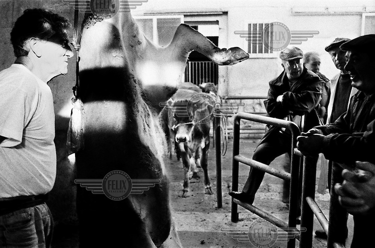 A slaughterman at an abattoir, standing next to a freshly killed cow, talks to butchers who have come to collect their animal's carcasses.