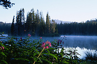 &quot;Fireweed at Serene Lakes&quot;- These Fireweed flowers were photographed at Serene Lakes. A small island can be seen through the fog and Castle Peak can be seen in the far distance.<br />