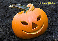 DC08-609z Jack-o-Lantern Pumpkin placed in garden after Halloween
