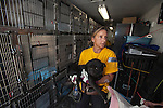 National Disaster Animal Response Team member Karen Reed carries a dog into a temporary shelter at the Columbia, SC airport after a raid on a puppy mill in Johnston, SC on Tuesday, Sept. 11, 2012. HSUS workers found over 200 dogs, nine horses and 30-40 fowl. (727-271-1498)