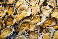 Fresh rock oysters for sale at Sydney Fish Market, Darling Harbour, Australia
