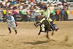 Steer riding as a clown chases the ride at the Jordan Valley Big Loop Rodeo
