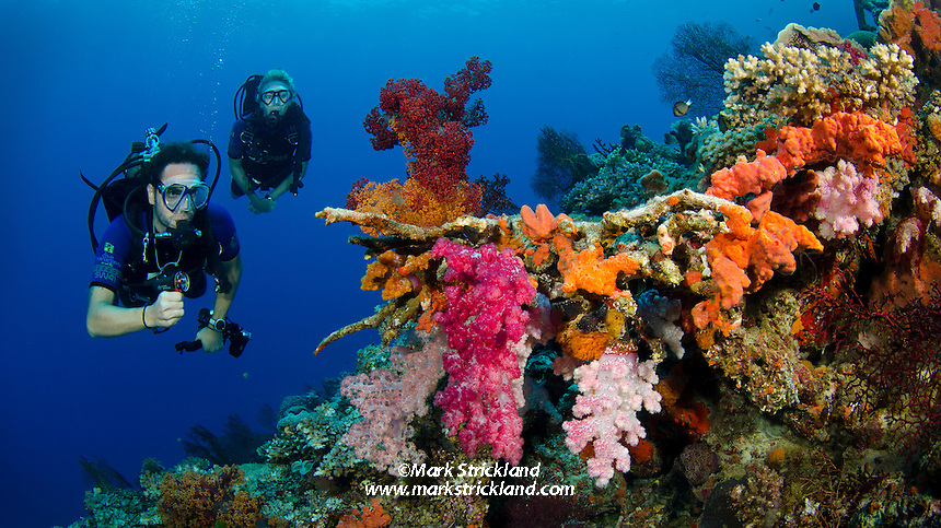 Chris and Vicki Liles  explore among vibrantly colored soft corals.  Vatu-i-ra, Bligh Water, Fiji, Pacific Ocean