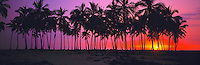 Royal Palms at Sunset, Pu'uhonua o Honaunau National Historic Park, Big Island of Hawaii