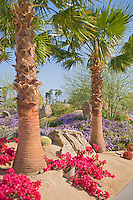 Desert Landscaping
