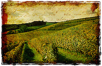 French Vineyard, Monein, France - Forgotten Postcard digital art European Travel collage