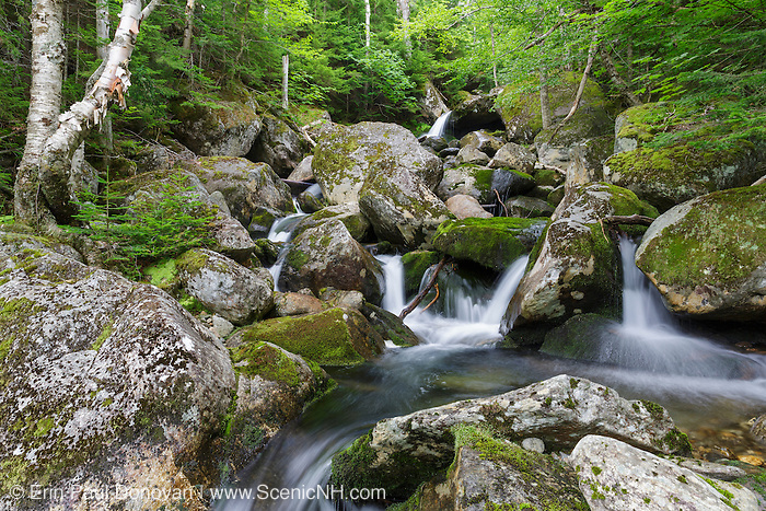 Cascade #6 on Cold Brook in Randolph, New Hampshire during the summer months. The 1908 map of the Northern Peaks of the White Mountains by Louis F. Cutter shows 11 cascades along this brook. This is cascade number 6.