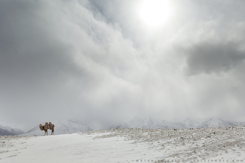 A lone Bactrian camel in a snow storm and extreme winds. ..Trekking through the high altitude plateau of the Little Pamir mountains, where the Afghan Kyrgyz community live all year, on the borders of China, Tajikistan and Pakistan.