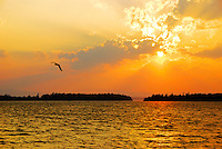 Lake Champlain at sunset with seagull wheeling in the orange light