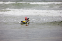 Surf Dog Competition. Imperial Beach, California..
