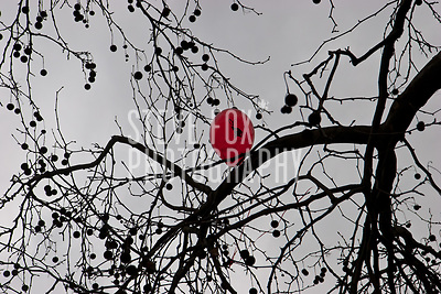 A lone Rabbit Balloon caught in tree branches, Chinese New Year 2011, London, England