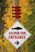 RY6533-D. Sign directing people to salmon watching festival on the Adams River, where hundreds of thousands of Sockeye Salmon (Oncorhynchus nerka) spawn. Adams River, British Columbia, Canada. Photo Copyright © Brandon Cole. All rights reserved worldwide.  www.brandoncole.com
