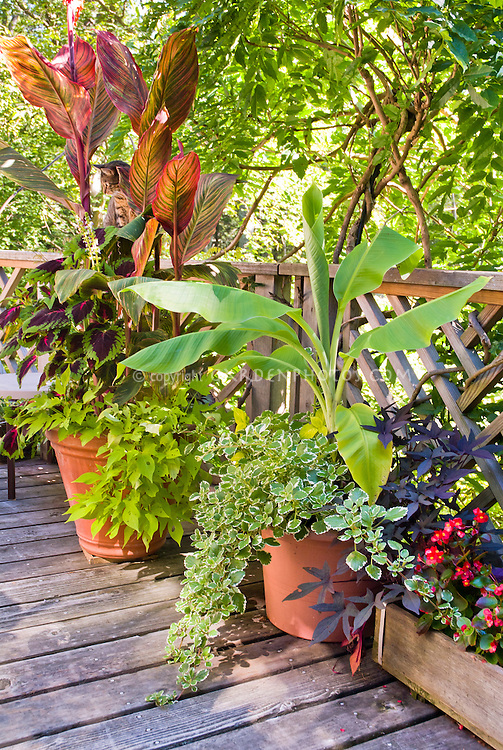 Tropical looking deck garden plantings in container pots plant flower stock photography - Tropical container garden ...