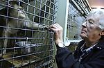 Foto: VidiPhoto<br /> <br /> BARNEVELD - Verzorgers Dick Venema (foto) en zijn dochter Anita nemen maandag afscheid van hun apen. Dinsdag komen medewerkers van de stichting AAP uit Almere de laatste acht apen van de Apenhof in Barneveld ophalen. Dat gebeurt nadat de Nederlandse Voedsel- en Warenautoriteit (NVWA) de verblijven vorig afkeurde. Volgens inspecteurs van de NVWA voldoen de verblijven van de dieren niet aan de eisen van deze tijd. Dick en Anita vragen zich echter af hoe het dan mogelijk is dat hun dieren ouder worden dan de apen in de Nederlandse dierentuinen. Volgens hen is er sprake van een 'opzetje' tussen NVWA en de stichting AAP. De Apenhof bestaat al 40 jaar. Jarenlang zorgde diezelfde overheid er voor dat in beslag genomen apen bij de Apenhof terecht kwamen.