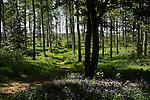 Wild flowers growing in summer woodland