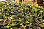 A tree nursery in Santa Maria Dolores, Guatemala.  The deforested region is heavily reliant on fire wood.  The nursery is supported by EcoLogic Development Fund.