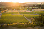 Chehalem's Ridgecrest Vineyard, Ribbon Ridge AVA, Willamette Valley, Oregon