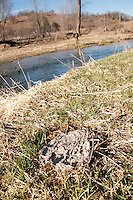 Manure from cattle along the Green River a trout stream in the Driftless Area of southwestern Wisconsin.