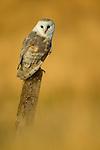 Birds of Prey and Night Owls