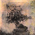 Chinese Bonsai tree. Photo based illustration.
