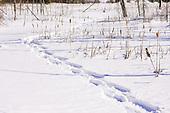 A snowshoe trail through  undisturbed wetlands in Quebec, Canada