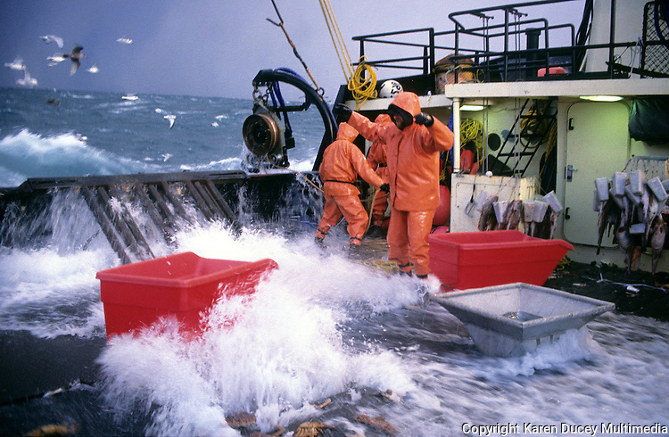 "Waves crash over the sides of the fishing vessel ""Aleutian Rover"" as it fishes for bairdi crab in the Bering Sea in November 1993.  Red totes were used for sorting out the females and juveniles which were thrown back in the sea as a way of preserving future stocks. The Bering Sea is known for having the worst storms in the world.  Crab fishing in the Bering Sea is considered to be one of the most dangerous jobs in the world.  This fishery is managed by the Alaska Department of Fish and Game and is a sustainable fishery.  The Discovery Channel produced a TV series called ""The Deadliest Catch"" which popularized this fishery."
