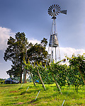 The windmill soars above vineyards, on the grounds of General's Ridge Vineyard and Winery.