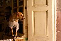 Dog looking out a window in San Miguel de Allende, Mexico