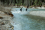 Cryptid bipedal primates fording a Cascade river, Washington