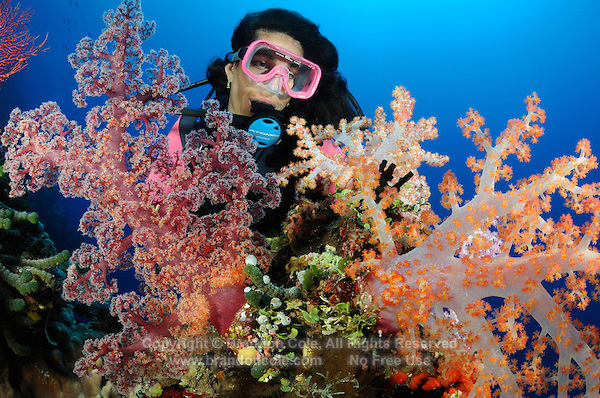 qe5274-D. scuba diver (model released) admires soft corals (Dendronephthya sp.). Fiji, tropical Pacific Ocean..Photo Copyright © Brandon Cole. All rights reserved worldwide.  www.brandoncole.com..This photo is NOT free. It is NOT in the public domain. This photo is a Copyrighted Work, registered with the US Copyright Office. .Rights to reproduction of photograph granted only upon payment in full of agreed upon licensing fee. Any use of this photo prior to such payment is an infringement of copyright and punishable by fines up to  $150,000 USD...Brandon Cole.MARINE PHOTOGRAPHY.http://www.brandoncole.com.email: brandoncole@msn.com.4917 N. Boeing Rd..Spokane Valley, WA  99206  USA.tel: 509-535-3489
