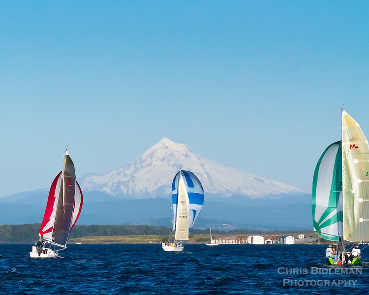 Three sailboats with colorful spinnaker sails out are racing on the Columbia River during summer with Mt Hood in the background during blue sky day