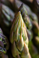 The vibrant green and purple tip of an asparagus spear.