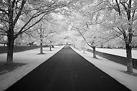 Ashford Stud farm road surrounded by trees and stone fences near Versailles, KY.  Infrared (IR) photograph by fine art photographer Michael Kloth.