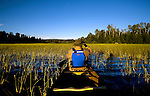 Canoeing through wild rice in the Boundary Water Canoe area in Northern Minnesota.
