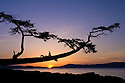 Sunset over the San Juan Islands and Rosario Strait with the leaning tree in Washington Park on  Fidalgo Island, Washington.