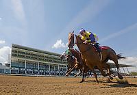 New Jersey - Horses